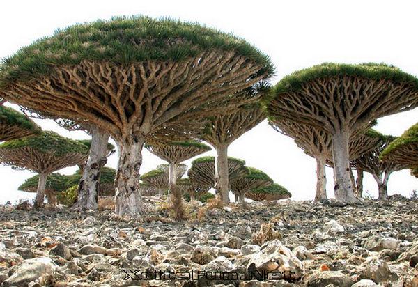 Yemen Tatil Turları