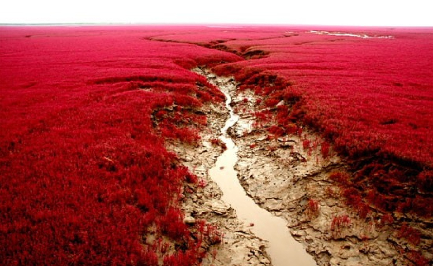 Panjin China  city images : Red Beach Panjin China | Simple & Interesting.