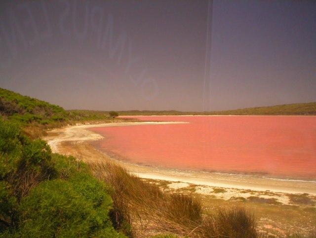 lake-hillier-pink-lake-in-australia-2