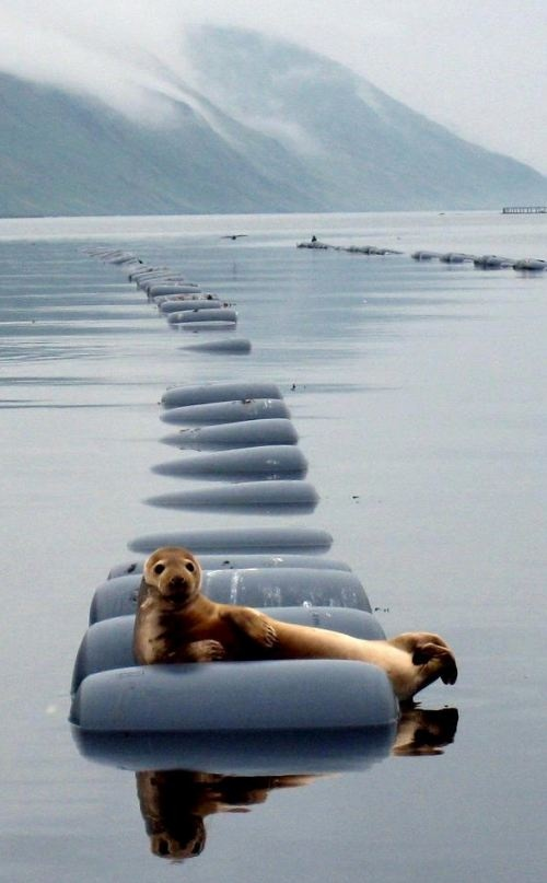 seal relaxation