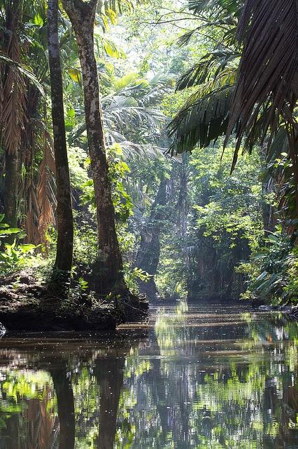 Costa Rica Parque Natural Tortuguero