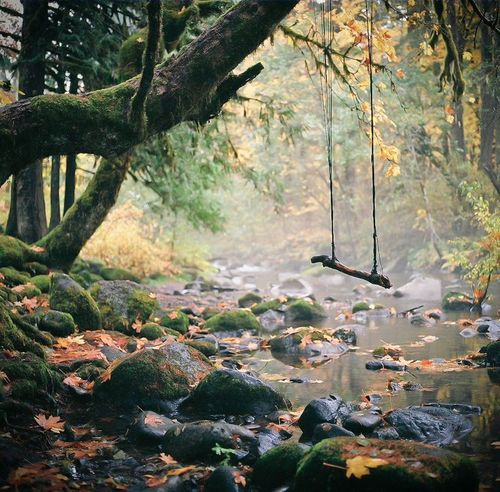 24Forest Swing, Hasselbad, Germany