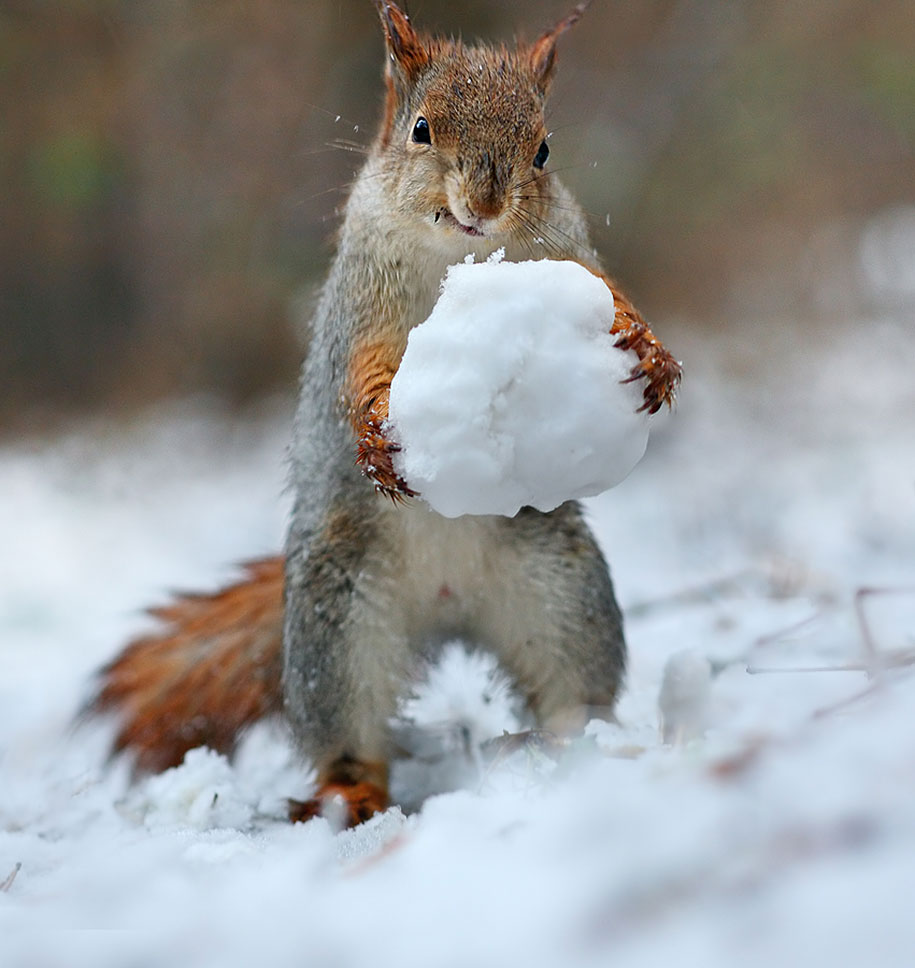 Squireles in  the snow. (5/6)