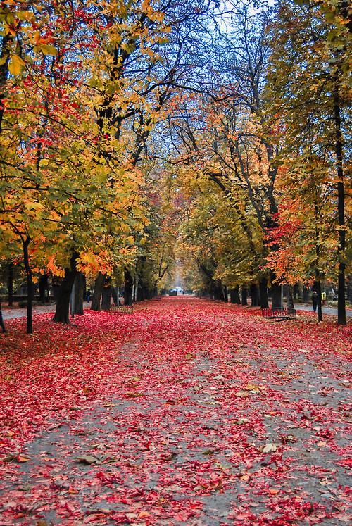 01Cluj-Napoca, Romania (by Marius Gatea)