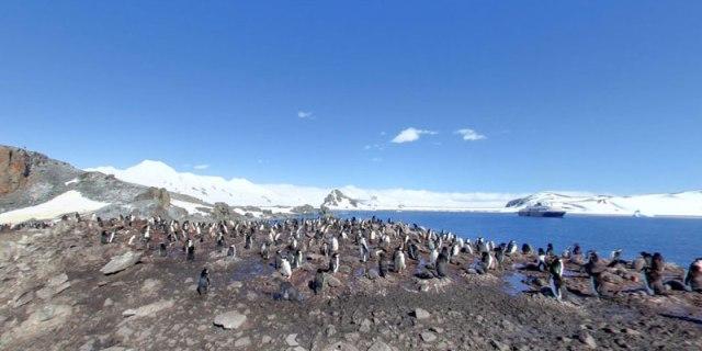 half-moon-island-antarctica-chinstrap-penguins-2
