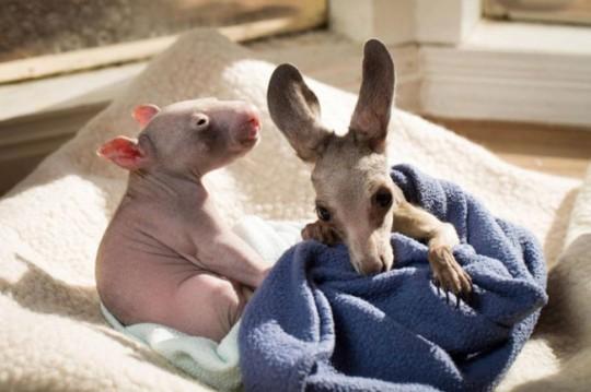 wombat-and-kangaroo-9-650x433