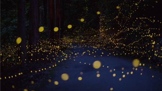 long-exposure-photos-of-fireflies-at-night-tsuneaki-hiramatsu-1 (1)