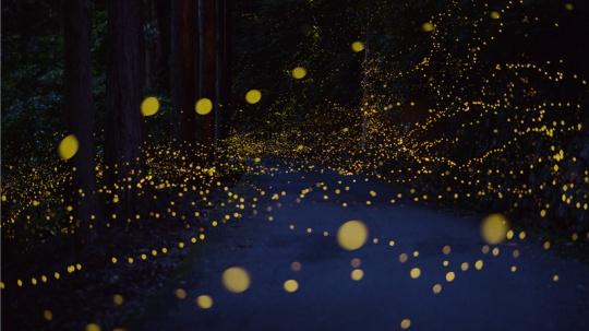 long-exposure-photos-of-fireflies-at-night-tsuneaki-hiramatsu-1