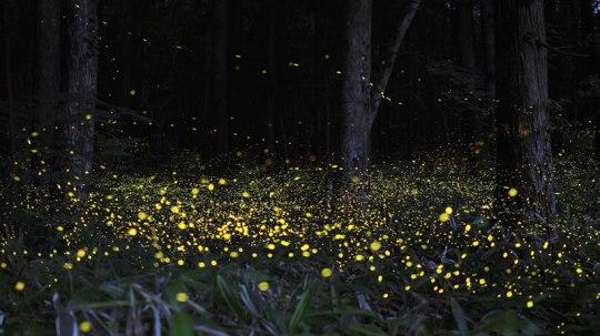 long-exposure-photos-of-fireflies-at-night-tsuneaki-hiramatsu-4