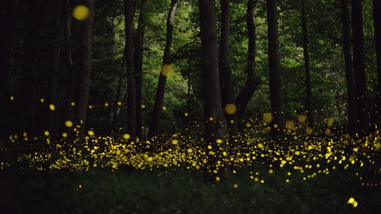 long-exposure-photos-of-fireflies-at-night-tsuneaki-hiramatsu-6