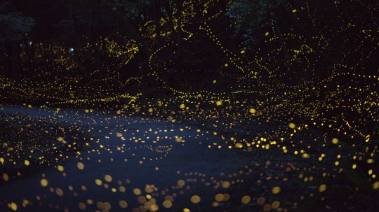 long-exposure-photos-of-fireflies-at-night-tsuneaki-hiramatsu-9