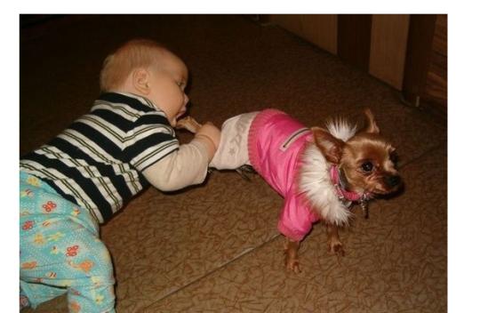 Mmmm, puppy looks scrumptious