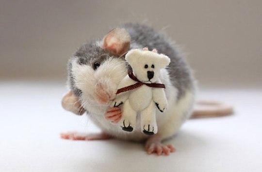 rats-with-teddy-bears-ellen-van-deelen-4